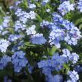 Весна идет, весне дорогу! (фотоотчет)