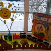 Фотоотчёт «Огород на окне в детском саду»