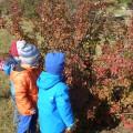 Коллективная аппликация во второй младшей группе «Осеннее дерево».