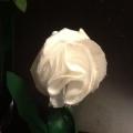Подарок мамочке к празднику 8 Марта «Любимой мамочке цветок»
