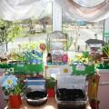 Огород на окне «Хуторок Луки и Лукерьи»