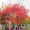 Фотоотчёт об осенней прогулке вокруг детского сада