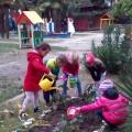 «Посадка семян цветов и рассады в горшочках в почву». Фотоотчет практического занятия в средней группе