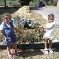 Фотоотчет «Мы— юные огородники!»