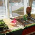Садик на окне