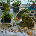Фотоотчёт об экологическом проекте «Огород на окошке»