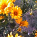 Целевая прогулка к клумбе с цветами