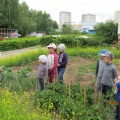 «Встреча с Лесовичком». Конспект экскурсии по экологической тропе с детьми среднего дошкольного возраста.