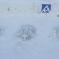 Зимний участок «Путешествие в Дорожную страну»