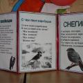 Творческий отчет по итогам проведения акций «Подкормите птиц зимой!», «С каждого по зернышку»