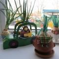 Проект «Семейка Чипполино. Огород на окне»