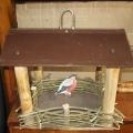 Семейный конкурс «И забыть никак нельзя, о том что птицы нам друзья»