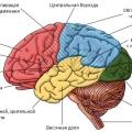 Роль речи в психическом развитии ребенка. Консультация для воспитателей групп компенсирующей направленности