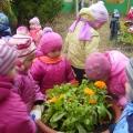 Памятки по организации наблюдений с детьми дошкольного возраста