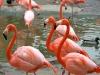 Легенда о фламинго