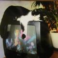Кошка Муся и реклама.