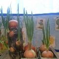 «Бабушкин дворик» (Огород на окне)