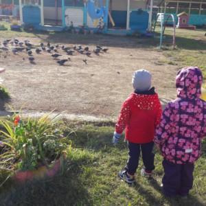 конспект занятия знакомство с голубями в средней группе