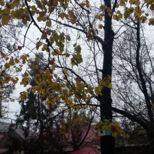 Конспект прогулки в старшей группе «Осенний листопад»